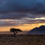 Fish River Canyon and Namibian Trees