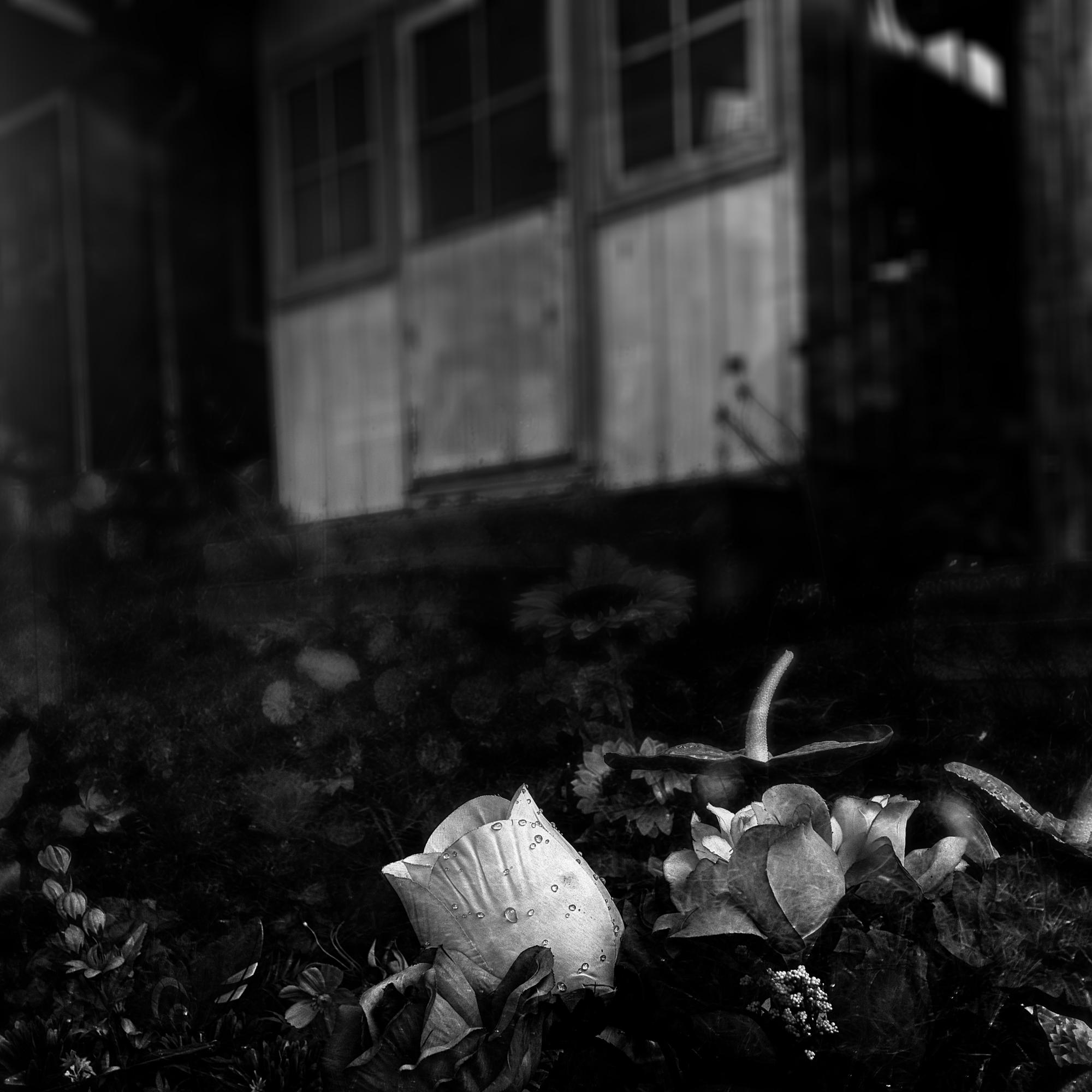 Stillleben – Chilenische Gräber